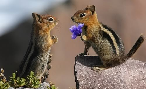 Animals Offer Flowers On Valentines Day