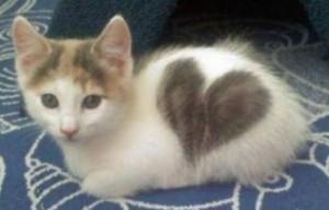 valentine_cat