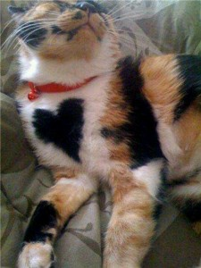 heart-markings-on-cats-15-great-photos-4